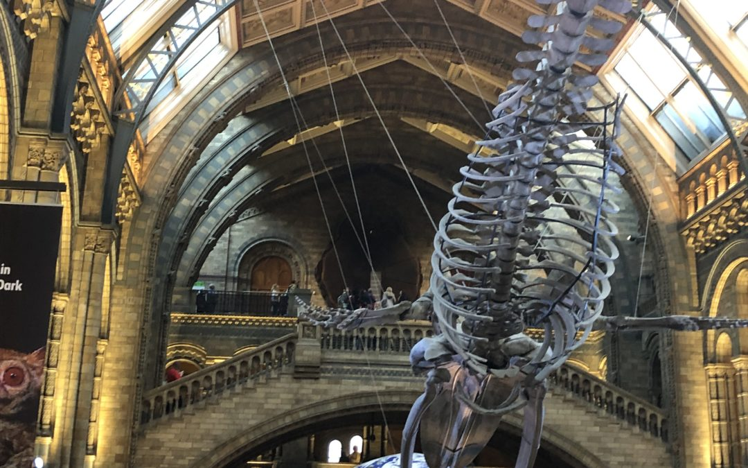 MEHR ALS EINE ALTERNATIVE FÜR REGENTAGE – DAS NATIONAL HISTORY MUSEUM in London